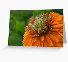Calendula Officinalis - Greenheart Orange Greeting Card