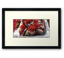 Raya's Ravine Framed Print