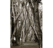 Lane of trees Photographic Print