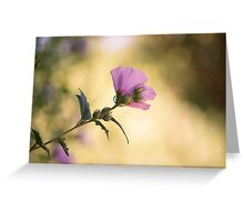 Hibiscus Syriacus 'Colestis' Flower Greeting Card