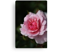 Pink Shades Of Rose  Canvas Print
