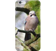 Jay iPhone Case/Skin
