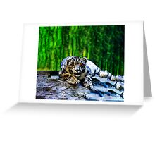 Snow Leopard With Red Eyes Drawing lying on rocks Greeting Card