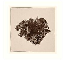 Plant Form 76 Art Print