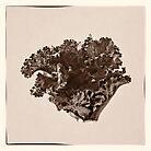 Plant Form 76 by niksheppard