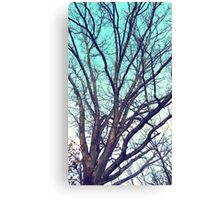 Trees - winter oak (2016) Canvas Print