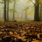 Autumn Mist by imagejournal