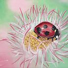 Ladybug on flower by Troglodyte