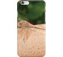 dragonfly resting in garden iPhone Case/Skin