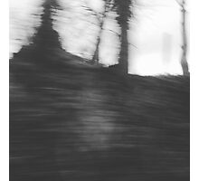 Abstract forest Photographic Print