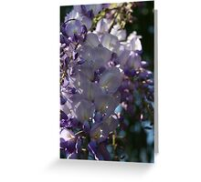 Wisteria Sunlight and Shadows Greeting Card