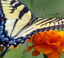 Yellow female Eastern Tiger Swallowtail Sticker