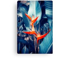 Tropical Parakeet Flower Canvas Print