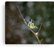 Blue Tit in Snow Canvas Print