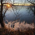 Ice World  by Remo Savisaar