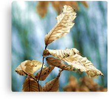 Leaves Canvas Print