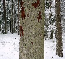 Forest in Winter by RedCurrant8