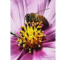Pollen Here, Pollen There, Pollen Everywhere Photographic Print