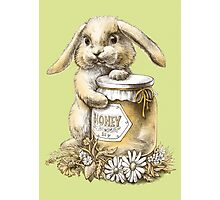 Honey Bunny  (two color) Photographic Print