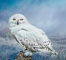 Snowy Owl in mist by Tarrby