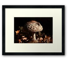 Focus on the Forest Floor Framed Print