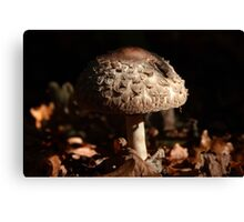 Focus on the Forest Floor Canvas Print