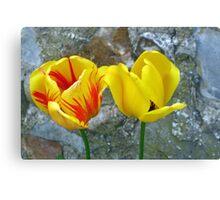 Patterned or Plain Tulips. Dorset UK Canvas Print