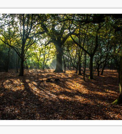 Sunbeams through the trees Sticker