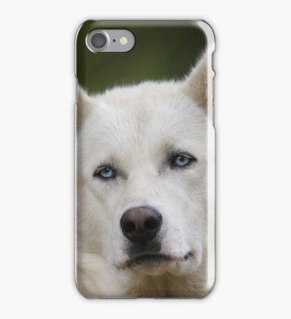 Working Dog Portrait iPhone Case/Skin