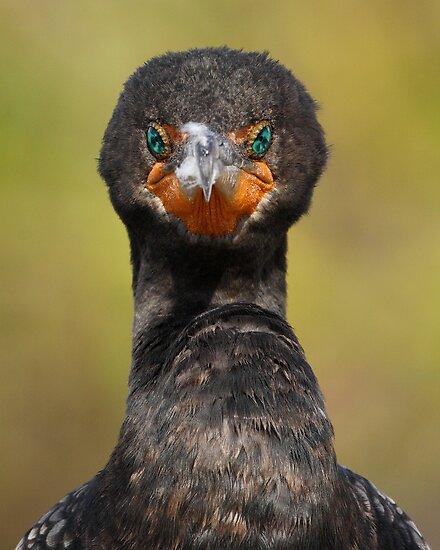 Cormorant Attitude by William C. Gladish