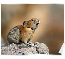 Pika Howling Poster