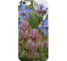 Flowering Borage iPhone Case/Skin