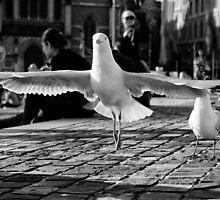 Landing by Leanne Robson