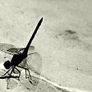 Grace of a dragonfly by iamelmana