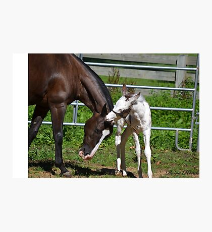 Mare & Foal Photographic Print