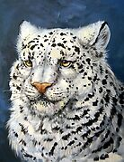 Snow Leopard by Lindsey Bell