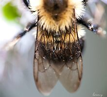 Bee Wings by beresy