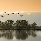 Fly a way by Jessy Willemse