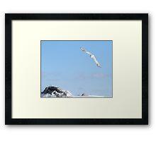The flight of the snowy owl Framed Print
