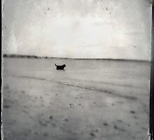 Black Lab in the Sea by redfox3