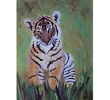 Sumatran Tiger Cub Photographic Print