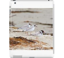 Hooded Plover iPad Case/Skin