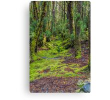 Enchanted Forest, Ronny Creek, Cradle Mountain, Tasmania #2 Canvas Print