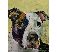 Pit Bull Portrait Photographic Print