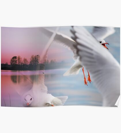 landscape lake and seagull Poster