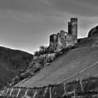 Castle and Vineyard On The Rhine River Germany by Ian Mooney