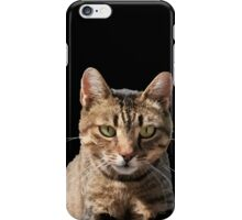 Portrait Of A Cute Tabby Cat With Direct Eye Contact Isolated iPhone Case/Skin