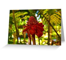 Porcelain Rose - Red Torch Ginger Lily in Hawaii Greeting Card