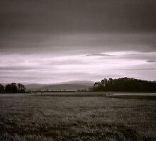 Distant Soul by Vicki Field