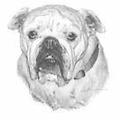 Zoey the bulldog drawing by Mike Theuer